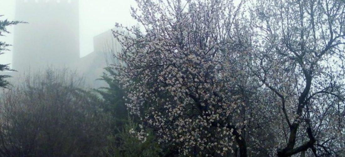 La floración de los almendros